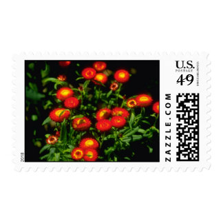 Orange Red flowers with yellow centers flowers Stamps