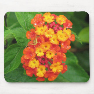 Orange-Red Lantana Mouse Pad