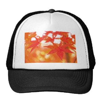 Orange Red Maple Leaves Hat