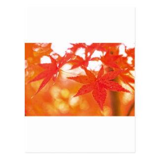 Orange Red Maple Leaves Postcard