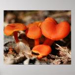 Orange Red Mushrooms Nature Photography Poster