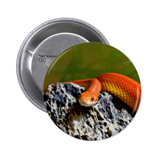 Orange-Red Repitle Snake On Rock Button