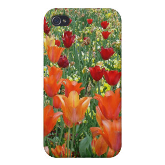 Orange & Red Tulips iPhone 4 Covers