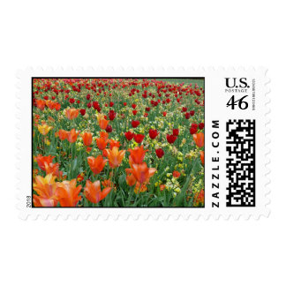 Orange & Red Tulips Stamps