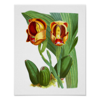 Orange Red Yellow Exotic Orchid Tropical Print