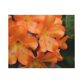 Orange Rhododendron Canvas Prints