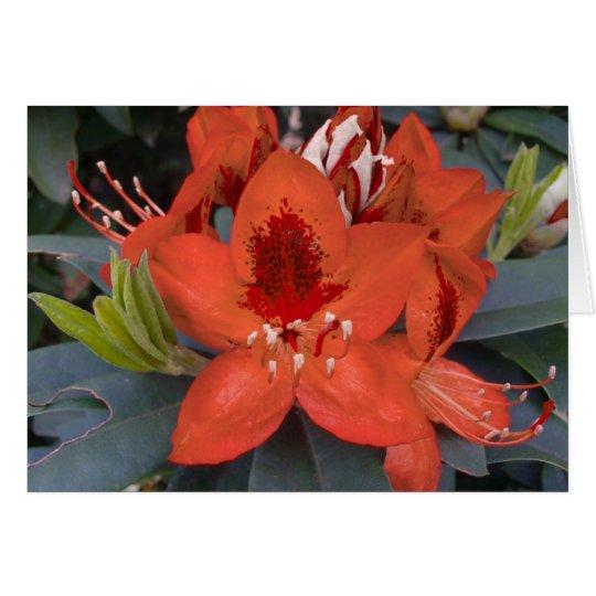 Orange Rhododendron Card