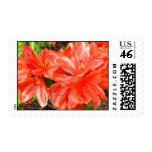 Orange Rhododendrons Postage Stamps