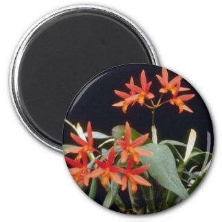 Orange Rojo 'King' (Laeliocattelaya) flowers Refrigerator Magnet