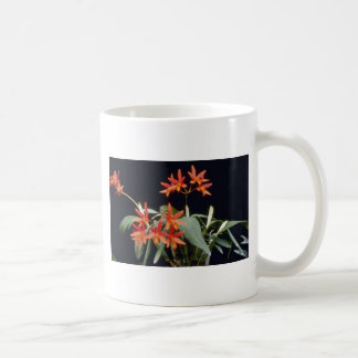 Orange Rojo 'King' (Laeliocattelaya) flowers Coffee Mugs