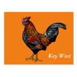 Orange Rooster Key West Post Card
