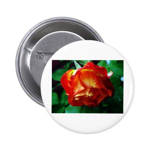 orange rose#1 button
