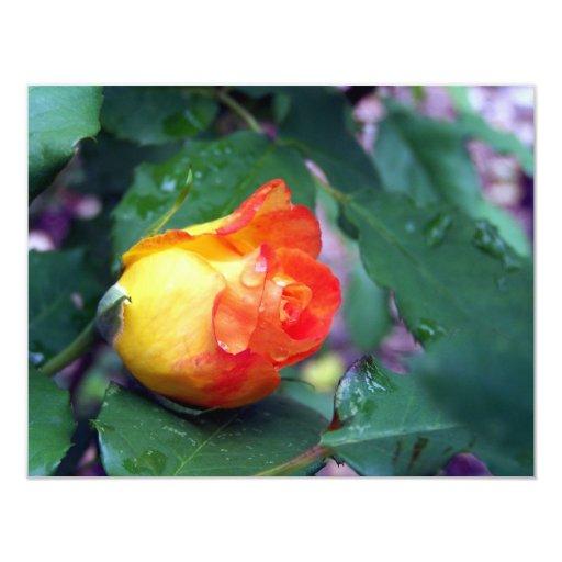 orange rose#2 4.25x5.5 paper invitation card