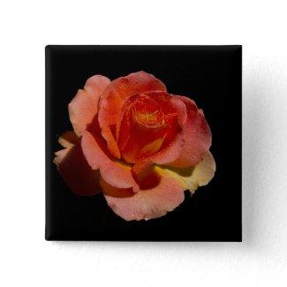 Orange Rose 2 zazzle_button