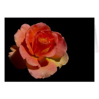 Orange Rose 2 zazzle_card
