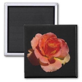 Orange Rose 2 zazzle_magnet