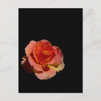 Orange Rose 2 zazzle_postcard