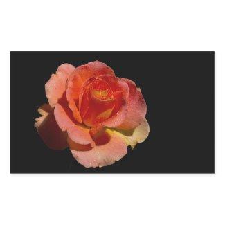 Orange Rose 2 zazzle_sticker
