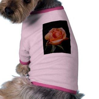 Orange Rose 3 zazzle_petshirt