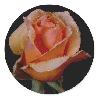 Orange Rose 3 zazzle_sticker