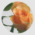 Orange Rose Against The White Wall Round Stickers
