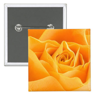 Orange Rose Button