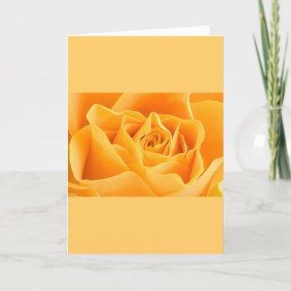 Orange Rose Cards