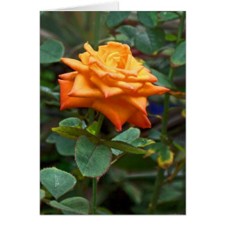 Orange Rose Card