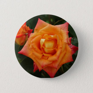 Orange Rose Flower Photo Round Badge Button