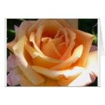 orange rose greeting cards