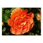 Orange Rose I Pretty Floral Card