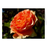 Orange Rose II Pretty Floral Card