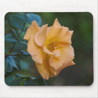 Orange Rose in bloom Mouse Pad