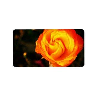 Orange rose custom address label