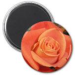 Orange Rose Magnet