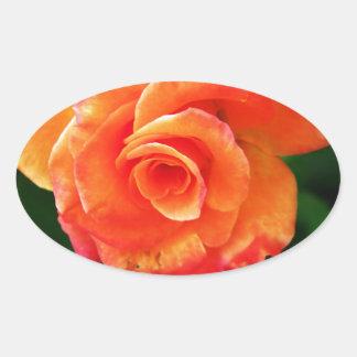 Orange rose oval sticker