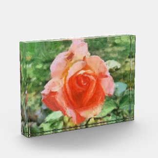 Orange rose painting awards