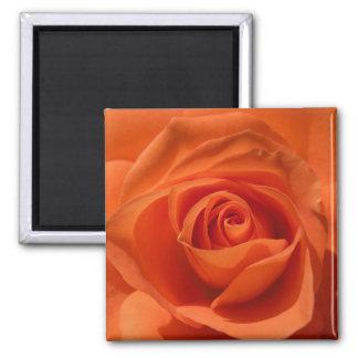 Orange Rose Photo Magnet