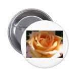 orange rose pinback button