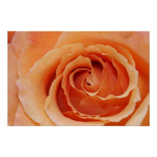 Orange Rose Poster (Version B)