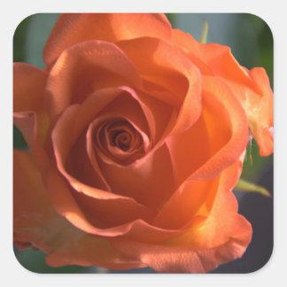 Orange rose square sticker