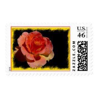 Orange Rose Stamp1