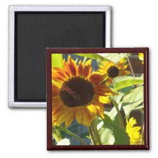 Orange Rose Sunflower Magnet