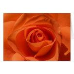 Orange Rose Valentine Card
