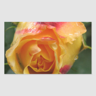 Orange Rose with a red part Sticker