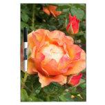 Orange Rose with encircling Rose Buds Dry-Erase Boards