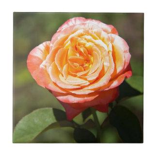 Orange Rose with Pink Edges Ceramic Tile