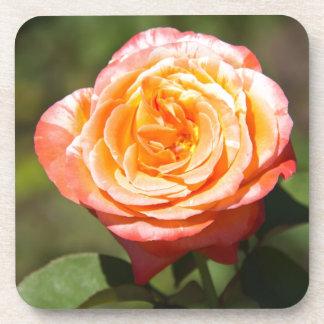 Orange Rose with Pink Edges Drink Coaster