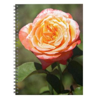Orange Rose with Pink Edges Journals