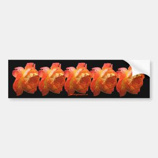 Orange Roses Flower Photo Bumper Sticker